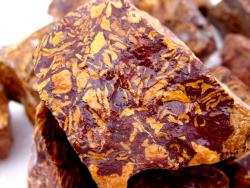 sea fossil jasper rough
