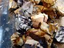 petrified zebra wood rough rock